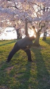 Cherry Blossom Side Angle Pose