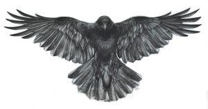 cropped-blackcrowbeautiful1.jpg